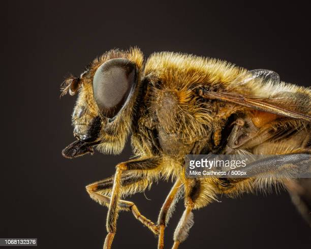 Close-up of bee against black background