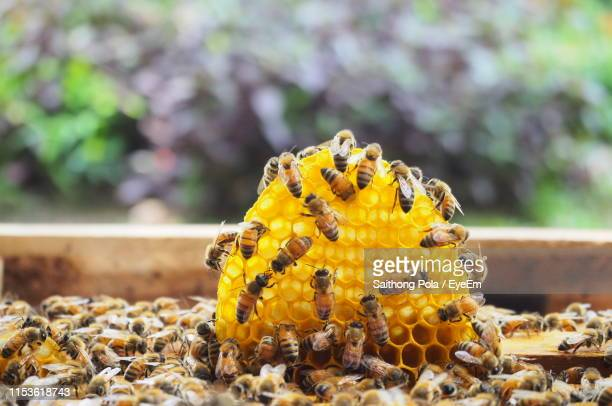 close-up of bee on honeycomb - beehive stock pictures, royalty-free photos & images