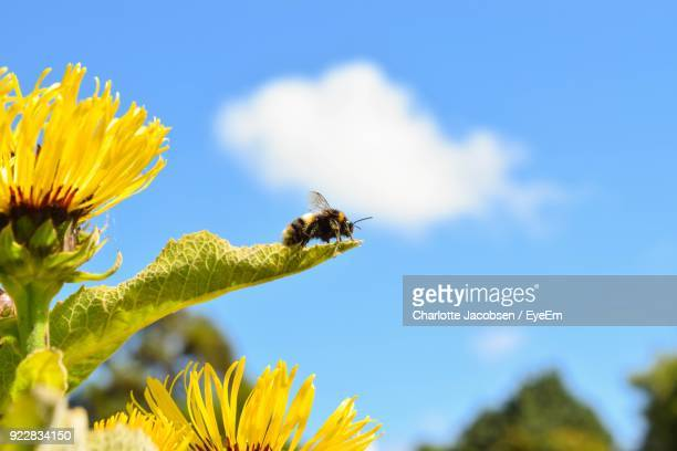 close-up of bee on leaf against blue sky - one animal stock photos and pictures