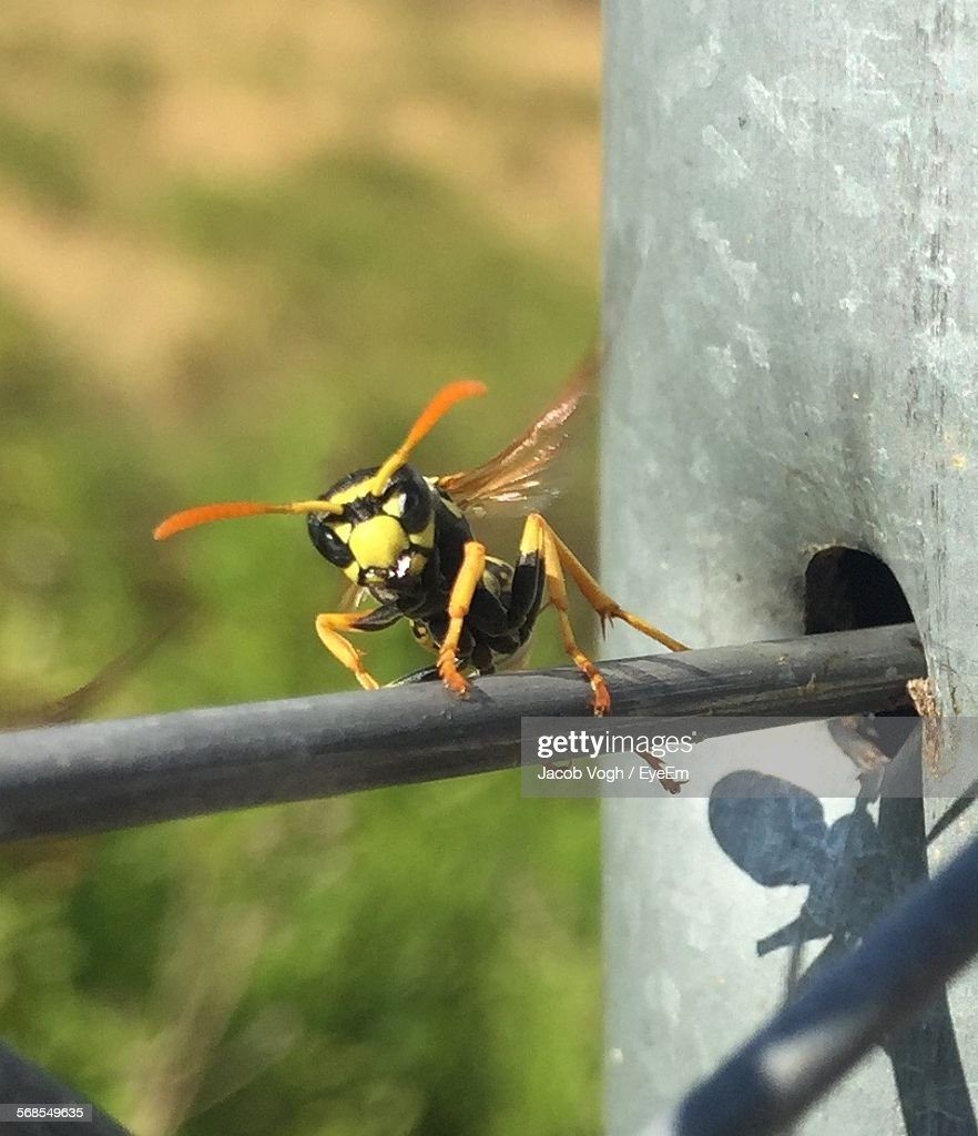 Close-Up Of Bee On Metal Structure : Stock Photo