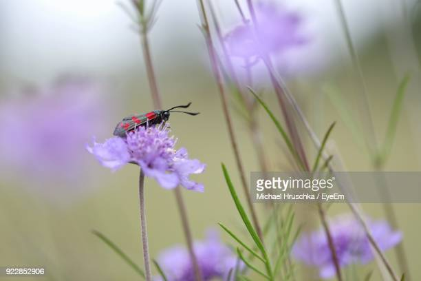 close-up of bee on purple flower - michael hruschka stock pictures, royalty-free photos & images