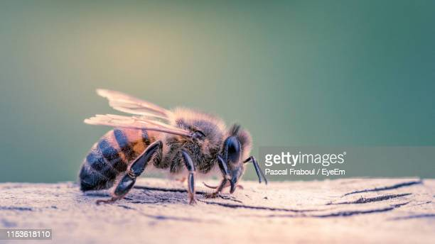 close-up of bee on tree - embrun stock photos and pictures
