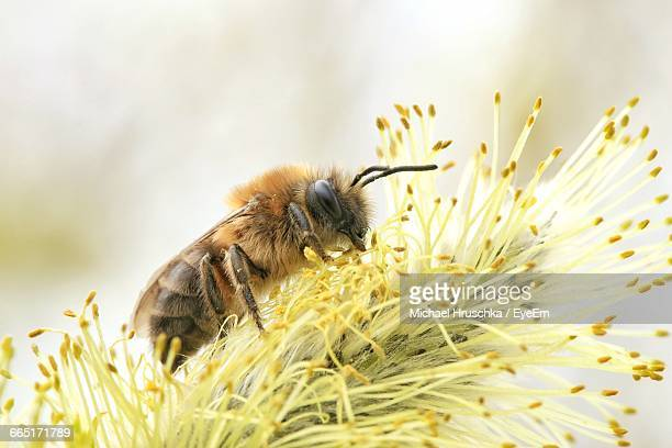 close-up of bee pollinating on flower - michael hruschka stock pictures, royalty-free photos & images