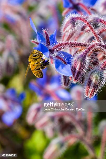 close-up of bee pollinating on purple flower - international landmark stock pictures, royalty-free photos & images