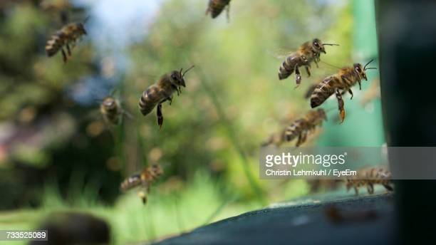 Close-Up Of Bees Flying