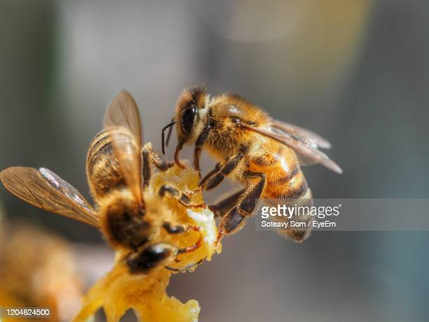 close-up of bees. - honey bee stock pictures, royalty-free photos & images