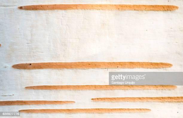Close-up of birch bark