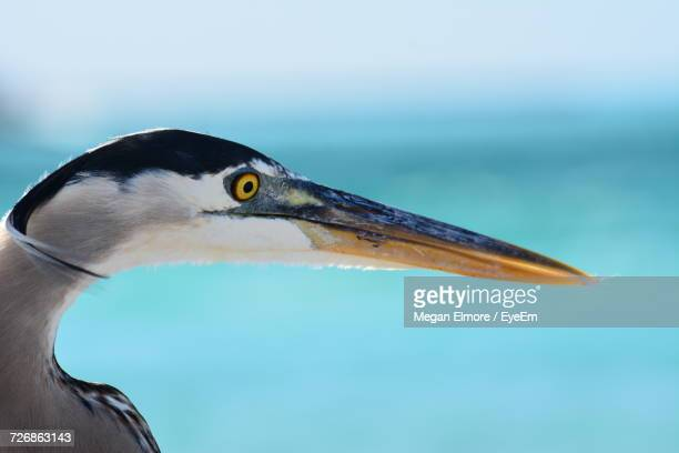 close-up of bird against blurred background - anna maria island stock pictures, royalty-free photos & images