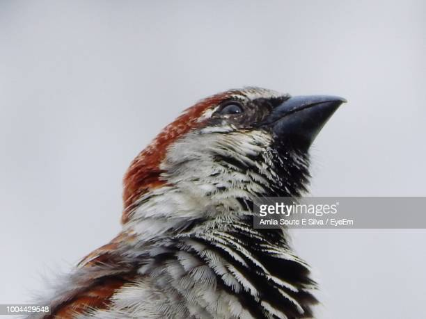Close-Up Of Bird Against White Background
