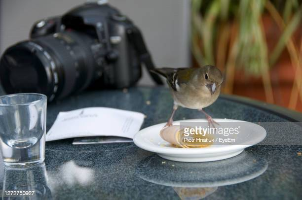 close-up of bird and camera on table - piotr hnatiuk stock pictures, royalty-free photos & images