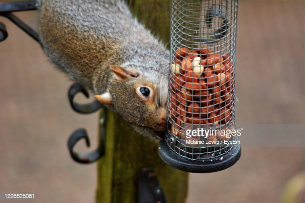 close-up of bird feeder - squirrel stock pictures, royalty-free photos & images