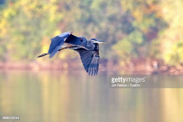 Close-Up Of Bird Flying Over Lake