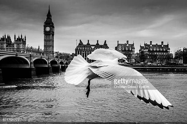 Close-Up Of Bird Flying Over River Thames