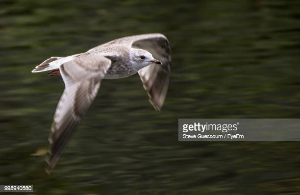 Close-Up Of Bird Flying Over Water