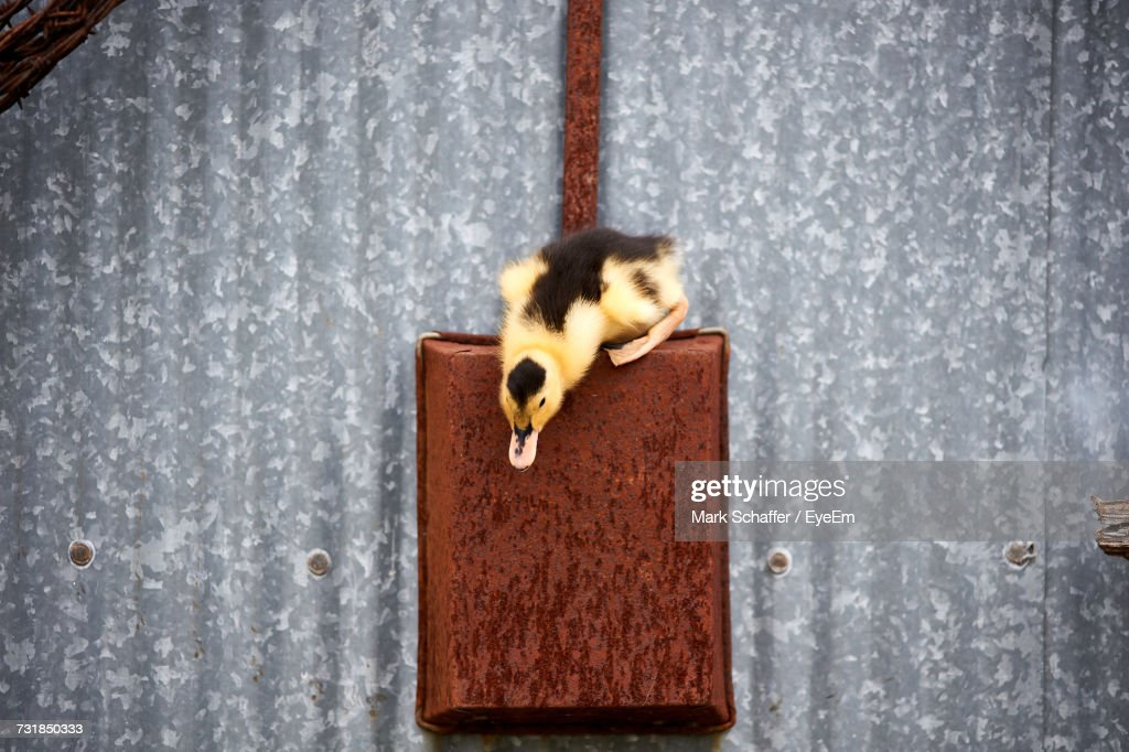 Close-Up Of Bird Hanging On Wall : Stock Photo