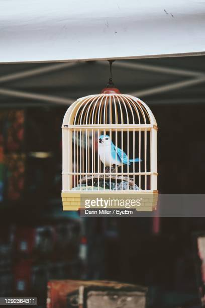 close-up of bird in cage - perching stock pictures, royalty-free photos & images
