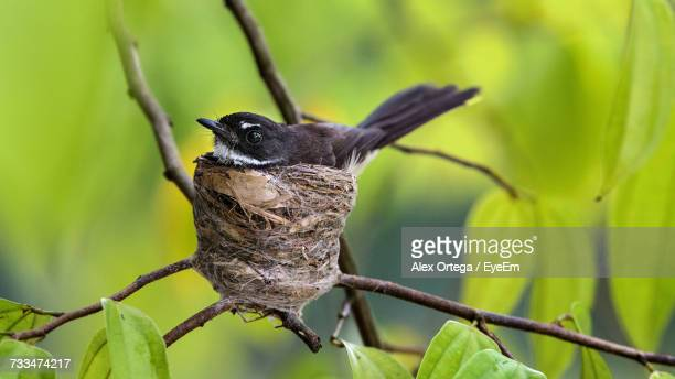 close-up of bird in nest - birds nest stock photos and pictures