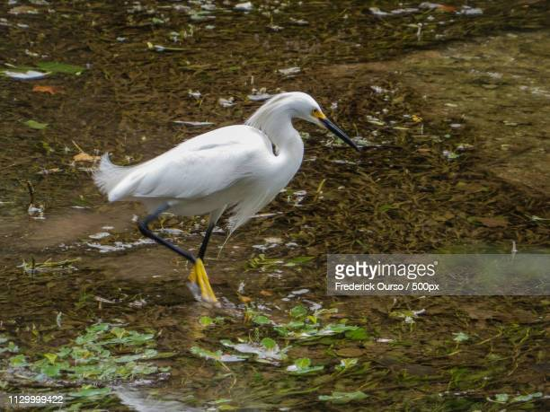 close-up of bird in water - frederick - fotografias e filmes do acervo