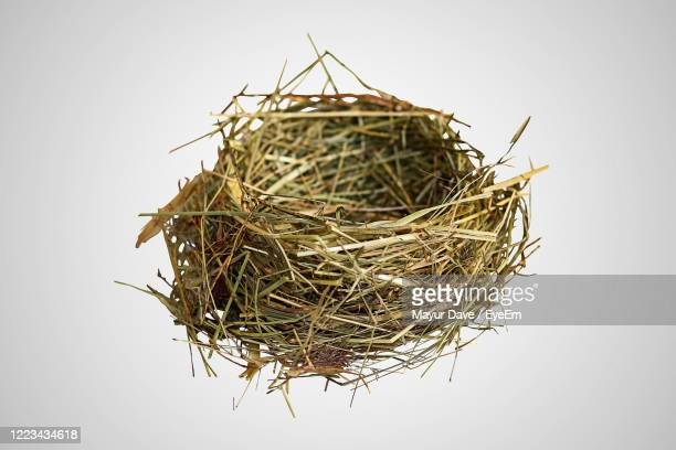 close-up of bird nest on plant against white background - birds nest stock pictures, royalty-free photos & images