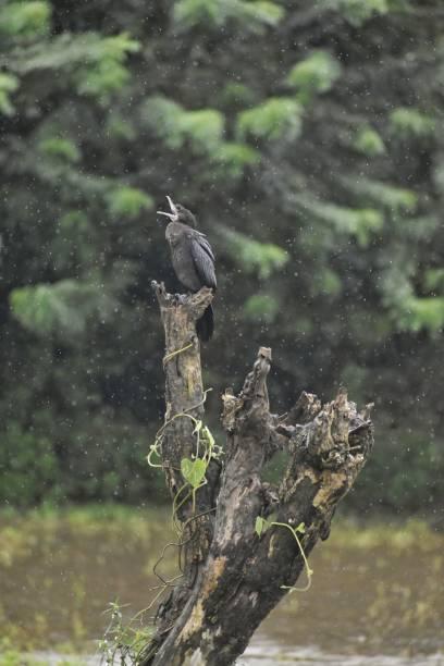 Close-up of bird of prey perching on tree