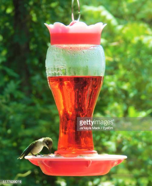 close-up of bird on feeder - mack stock pictures, royalty-free photos & images