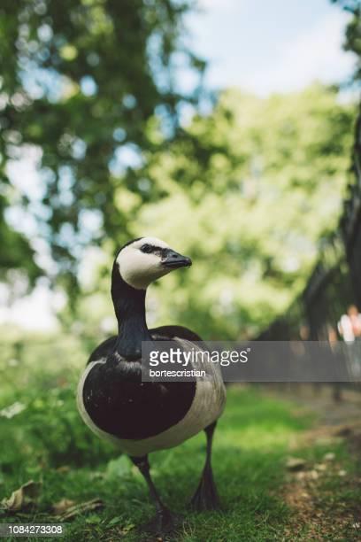 close-up of bird on field - bortes - fotografias e filmes do acervo