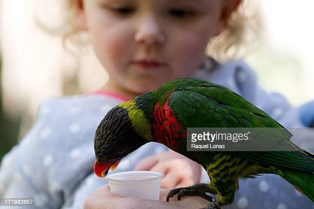 Close-up of bird on hand, toddler girl watching