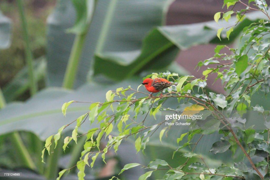 Close-Up Of Bird On Plant : Photo
