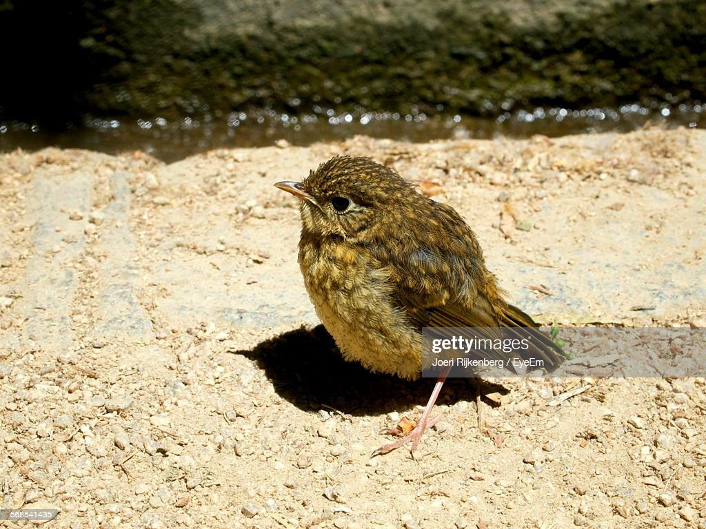 Close-Up Of Bird On Retaining Wall : Stock Photo