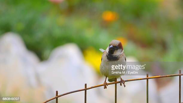 Close-Up Of Bird Perched On Fence Against Blurred Background