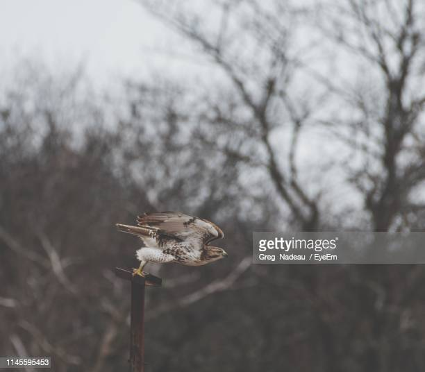 Close-Up Of Bird Perching Against Bare Trees