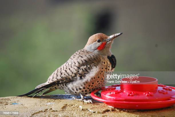 Close-Up Of Bird Perching By Red Feeder