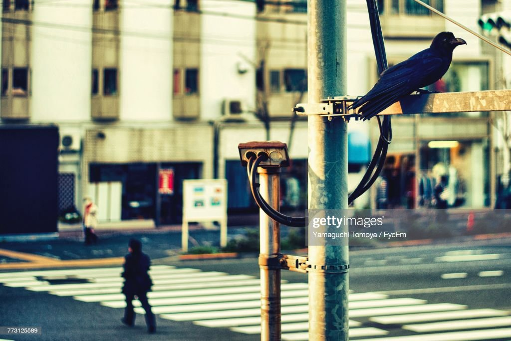 Close-Up Of Bird Perching In City : Stock Photo