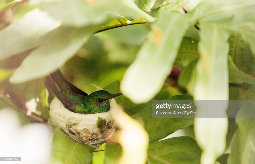 Close-Up Of Bird Perching In Nest : Photo