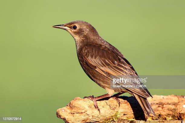 close-up of bird perching on a branch - taunton somerset stock pictures, royalty-free photos & images