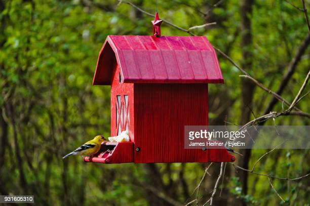 close-up of bird perching on birdhouse against tree - birdhouse stock pictures, royalty-free photos & images