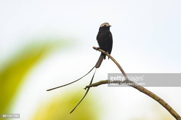 close-up of bird perching on branch against clear sky - marek stefunko stockfoto's en -beelden