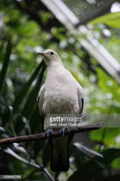 close-up of bird perching on branch - jurong bird park stock pictures, royalty-free photos & images