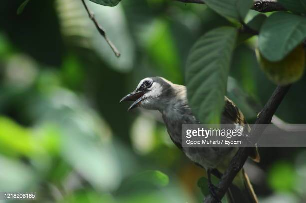 close-up of bird perching on branch - oppie muharti stock pictures, royalty-free photos & images