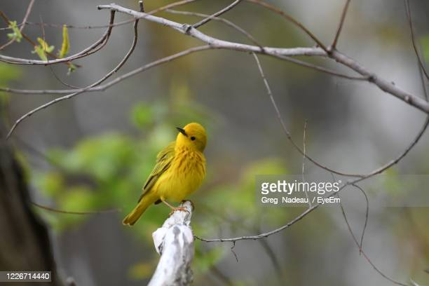 close-up of bird perching on branch - greg nadeau stock pictures, royalty-free photos & images