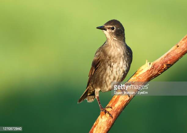close-up of bird perching on branch - taunton somerset stock pictures, royalty-free photos & images