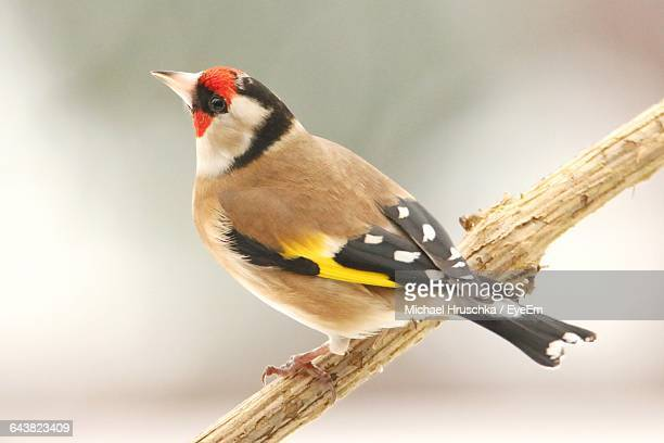 close-up of bird perching on branch - michael hruschka stock pictures, royalty-free photos & images