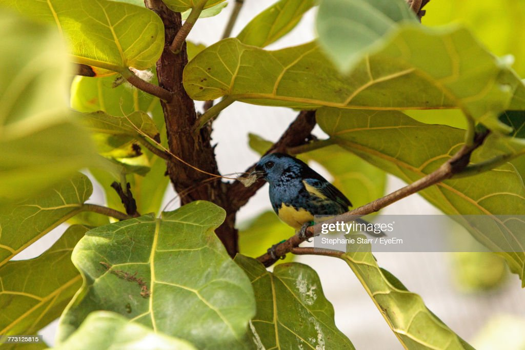 Close-Up Of Bird Perching On Branch : Stock Photo