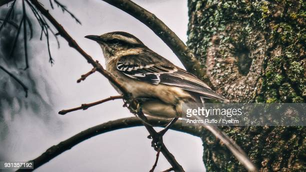 close-up of bird perching on branch - andres ruffo stock-fotos und bilder
