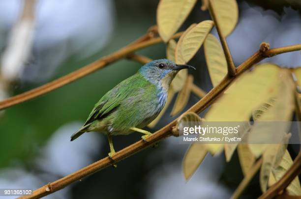 close-up of bird perching on branch - marek stefunko stock photos and pictures