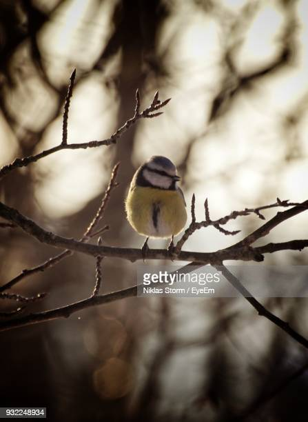 close-up of bird perching on branch - niklas storm eyeem stock photos and pictures