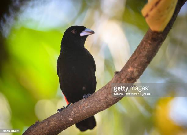 close-up of bird perching on branch - marek stefunko stockfoto's en -beelden
