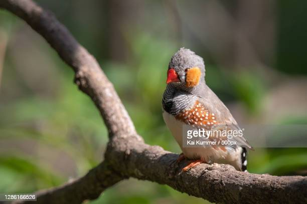 close-up of bird perching on branch,germany - baum stock pictures, royalty-free photos & images