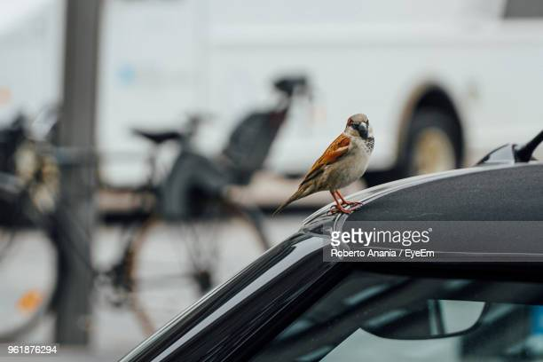 close-up of bird perching on car - songbird stock pictures, royalty-free photos & images