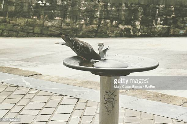 Close-Up Of Bird Perching On Drinking Fountain